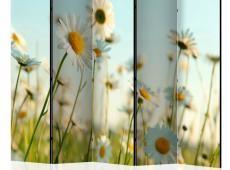 Paraván - Daisies - spring meadow II [Room Dividers]